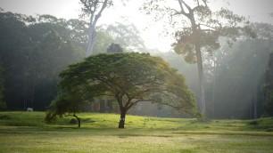 Un blog qui compense ses émissions de carbone