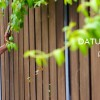 http://www.lilithebanyantree.fr/wp-content/uploads/2014/02/bandeauCelestine1.jpg