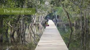 the Banyan tree sur facebook